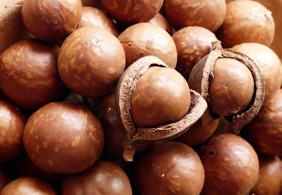 This-Is-Why-You-Should-Go-Nuts-For-Macadamia-Nuts
